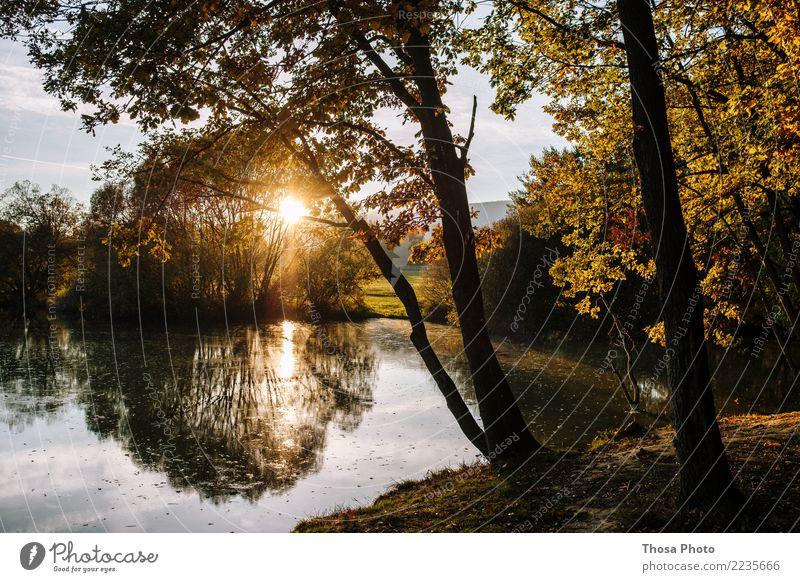 Slovakia II Natur Landschaft Herbst Schönes Wetter wild braun gelb gold Sonne Baum Küste Slowakische Republik Abendsonne Idylle See schön Farbfoto Außenaufnahme