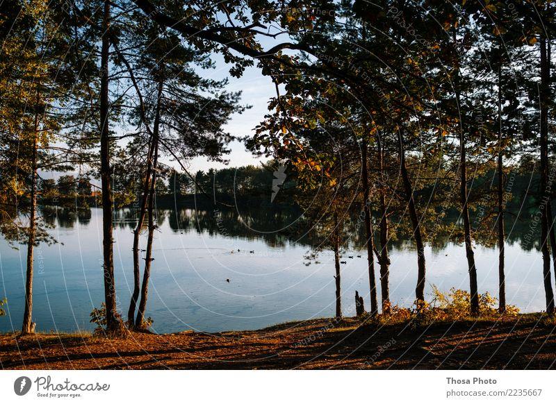 Slovakia Umwelt Landschaft Wetter Wald See Holz authentisch natürlich trocken braun gelb gold Herbst Baum Slowakische Republik Idylle Wasser Küste Abendsonne