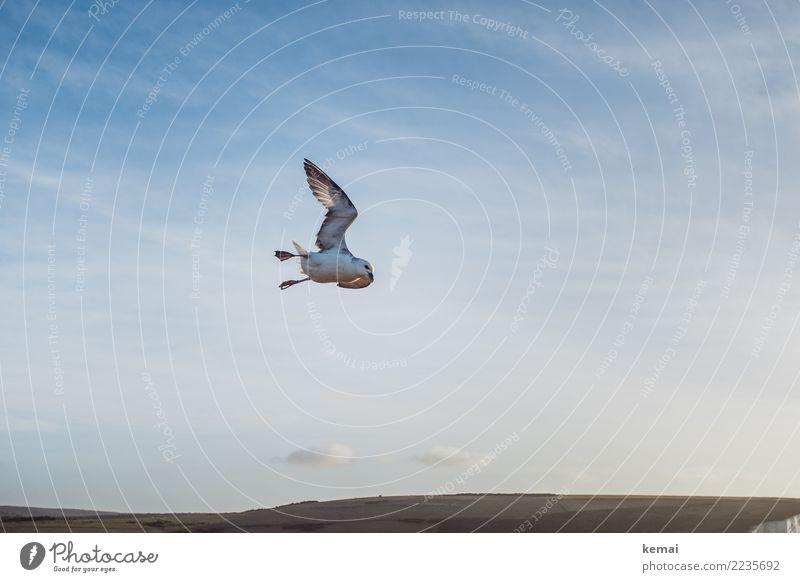 To be free like the birds that fly past me elegant Leben harmonisch Wohlgefühl Zufriedenheit ruhig Abenteuer Ferne Freiheit Natur Landschaft Tier Himmel Wolken