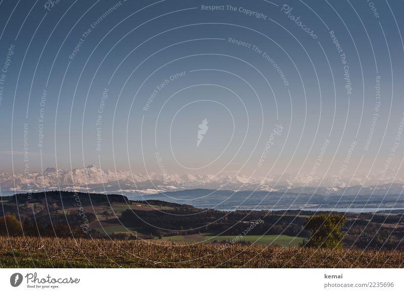 Bodenseeblick Erholung ruhig Freizeit & Hobby Ferien & Urlaub & Reisen Ausflug Abenteuer Ferne Freiheit Winter Natur Landschaft Wasser Wolkenloser Himmel