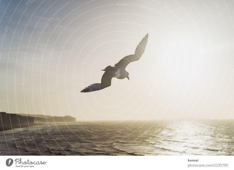 Airborne. Leben Wohlgefühl Erholung ruhig Abenteuer Ferne Freiheit Landschaft Wasser Schönes Wetter Wellen Küste Meer Insel England Klippe fliegen authentisch
