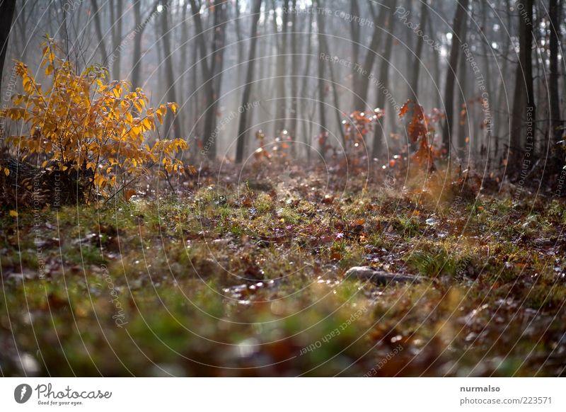 im Herbstwald Natur Baum Pflanze Wald Gras Umwelt Stimmung glänzend Nebel wild Sträucher Baumstamm Schönes Wetter Waldboden