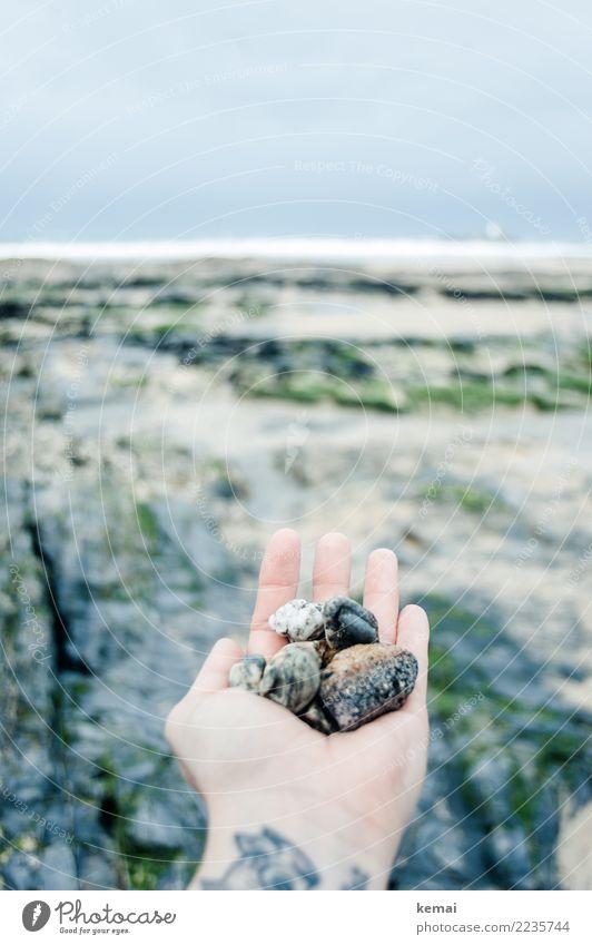Schätze Mensch Natur Ferien & Urlaub & Reisen Hand Meer Erholung ruhig Strand Leben Lifestyle kalt Küste Spielen Freiheit Stein Felsen
