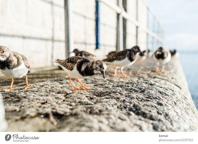Freundliche Vögel Natur Ferien & Urlaub & Reisen Erholung Tier ruhig Leben Küste klein Freiheit Vogel Zusammensein Freundschaft Ausflug Freizeit & Hobby
