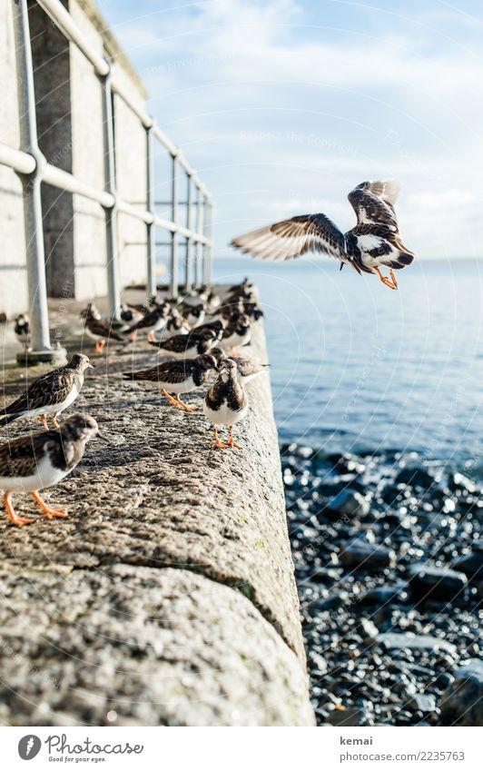 Schwungvoll | Landen Leben harmonisch Wohlgefühl Zufriedenheit Erholung ruhig Ferien & Urlaub & Reisen Tourismus Ausflug Freiheit Natur Tier Himmel Wolken