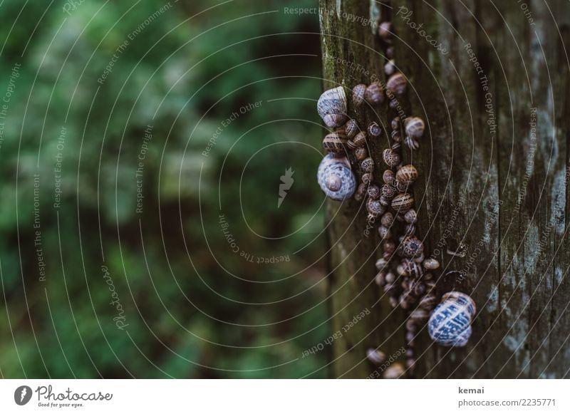 Familientreffen, mehrere Generationen Natur grün Erholung Tier ruhig Holz klein außergewöhnlich braun Zusammensein Freundschaft Ausflug Wildtier sitzen verrückt