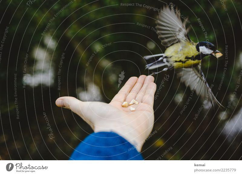 Der Meisenmann IV Mensch Hand Tier Wald Leben Spielen außergewöhnlich Vogel fliegen Freundschaft Freizeit & Hobby Park Wildtier authentisch Abenteuer