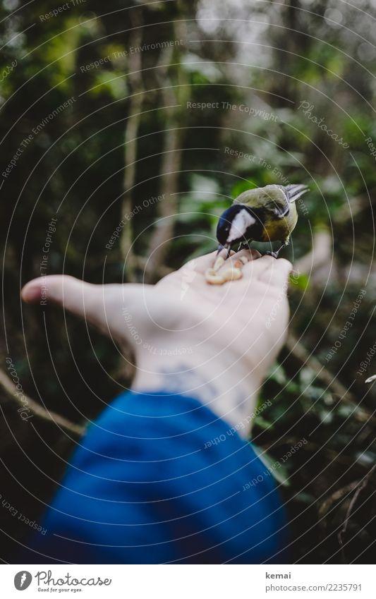 Der Meisenmann II Nuss Zufriedenheit Freizeit & Hobby Spielen Abenteuer Mensch Hand Finger Handfläche 1 Tier Park Wald Wildtier Vogel Kohlmeise Fressen füttern