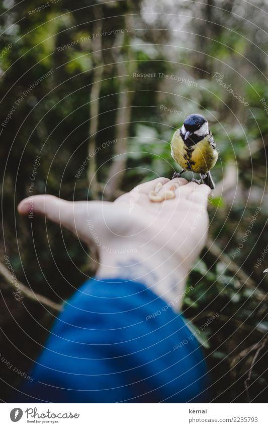 Der Meisenmann harmonisch Zufriedenheit ruhig Freizeit & Hobby Spielen Ausflug Abenteuer Leben Hand Finger Handfläche 1 Mensch Tier Park Wald Wildtier Vogel