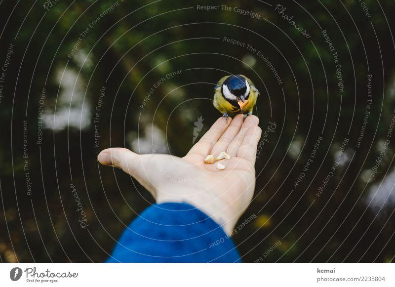 Nussliebhaber. Natur Hand Erholung Tier ruhig außergewöhnlich Freiheit Vogel Zusammensein Freundschaft Freizeit & Hobby Zufriedenheit Wildtier sitzen Abenteuer