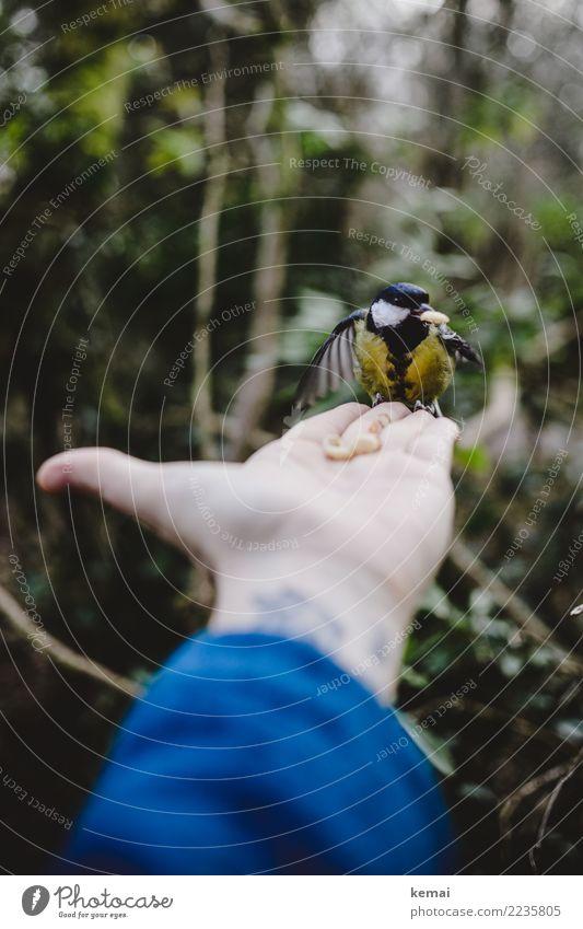 Der Meisenmann III Mensch Hand Tier Wald Leben klein Spielen außergewöhnlich Vogel Freundschaft Freizeit & Hobby Zufriedenheit Park Wildtier sitzen authentisch