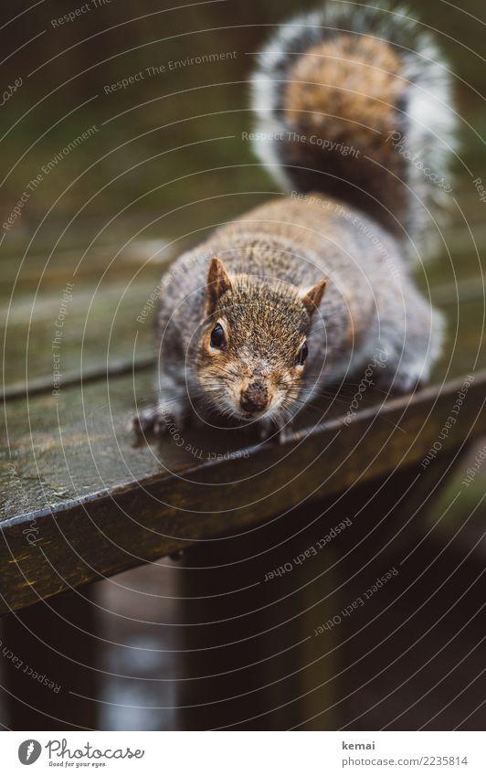 Nuts? Natur Tier natürlich außergewöhnlich braun Freundschaft Park Wildtier sitzen authentisch Tisch niedlich Neugier Vertrauen Fell selbstbewußt