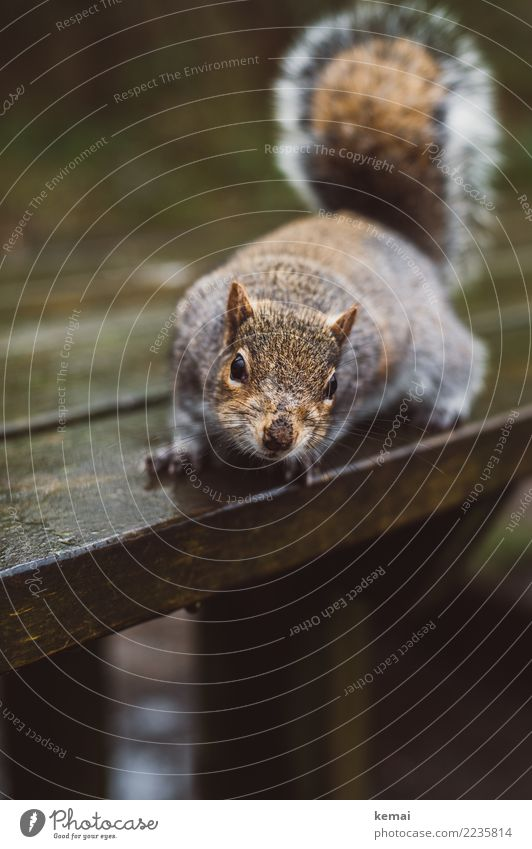 Nuts? Tisch Holztisch Natur Tier Park Wildtier Tiergesicht Fell Eichhörnchen 1 Blick sitzen authentisch außergewöhnlich frech natürlich Neugier niedlich braun