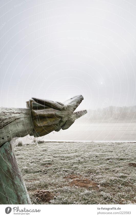 Fang das Sonnenbällchen! Umwelt Natur Landschaft Pflanze Urelemente Luft Himmel Winter Wetter Nebel Eis Frost Gras Wiese Seeufer Flussufer Tier 1 Holz