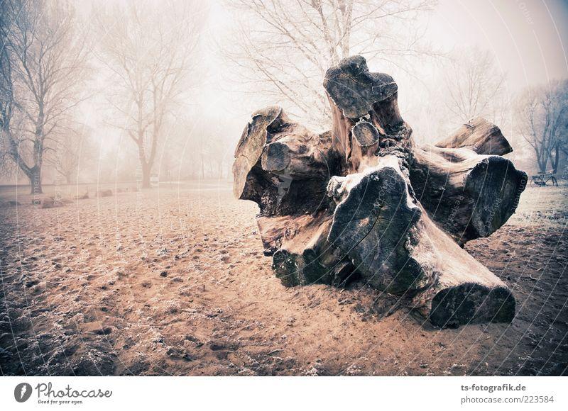 Gestrandet I Umwelt Natur Landschaft Pflanze Urelemente Sand Winter Wetter Nebel Eis Frost Baum Wald Strand gigantisch groß kalt braun Baumstamm Baumstumpf