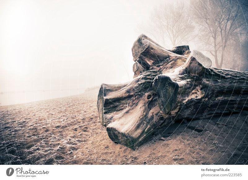 Gestrandet II Umwelt Natur Landschaft Pflanze Urelemente Sand Luft Wasser Horizont Winter Wetter Nebel Eis Frost Baum Küste Seeufer Strand alt kalt braun