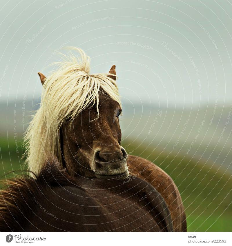 Soll ich? Tier Erholung Denken Stimmung braun blond warten Wind ästhetisch Pferd wild stehen natürlich Tiergesicht Wildtier nachdenklich