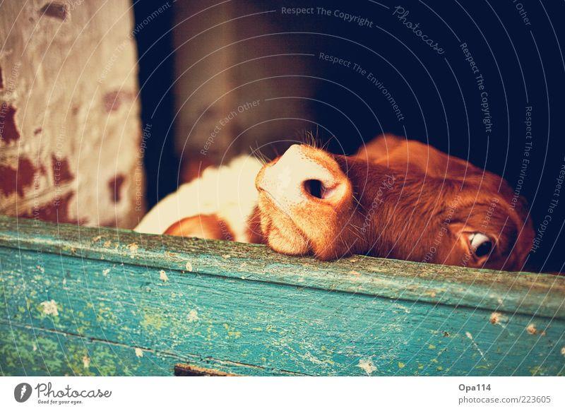 Na duuuuu??! weiß grün Auge Tier Holz grau Stein braun Tierjunges warten Tierpaar gold Sicherheit stehen weich Tiergruppe