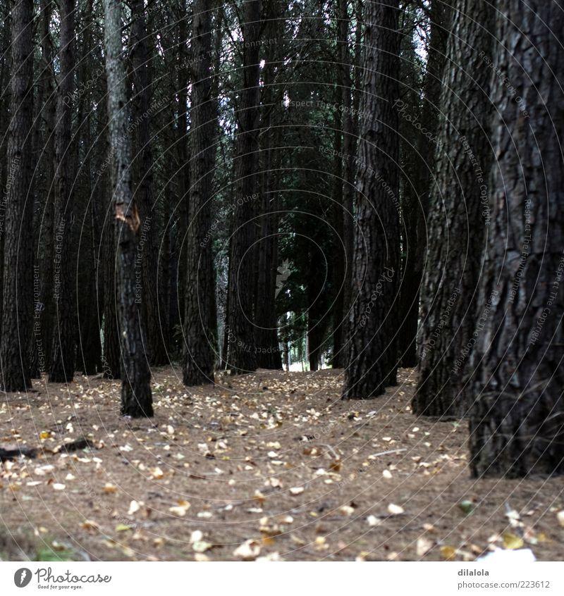 Natur Pflanze Einsamkeit Wald Herbst Landschaft Umwelt Ende