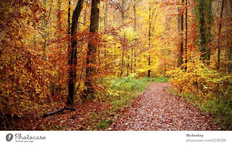 Frohe Weihnachten 2017 Umwelt Natur Landschaft Pflanze Herbst schlechtes Wetter Regen Baum Blume Gras Moos Blatt Wildpflanze Wald Blühend leuchten authentisch