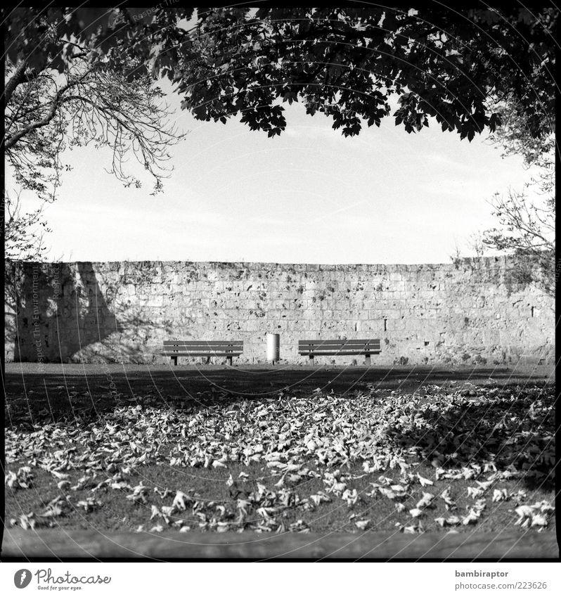 Im Park Natur Herbst Baum Blatt Symmetrie Bank Mauer Zweige u. Äste Herbstlaub Blätterdach Sitzgelegenheit Textfreiraum unten Schwarzweißfoto Außenaufnahme