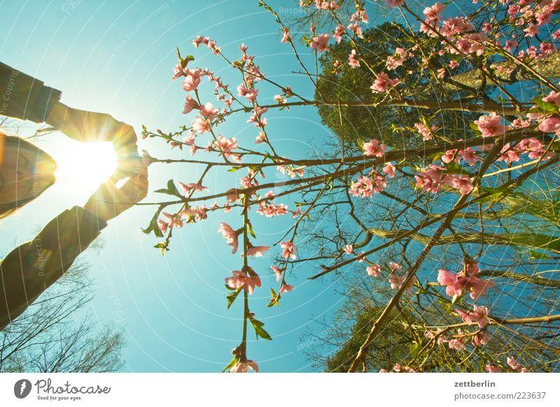 Fotos im Frühling Frau Mensch Natur Hand Sonne Wald Freiheit Umwelt Blüte Frühling Erwachsene Park Freizeit & Hobby Ausflug wandern Wachstum