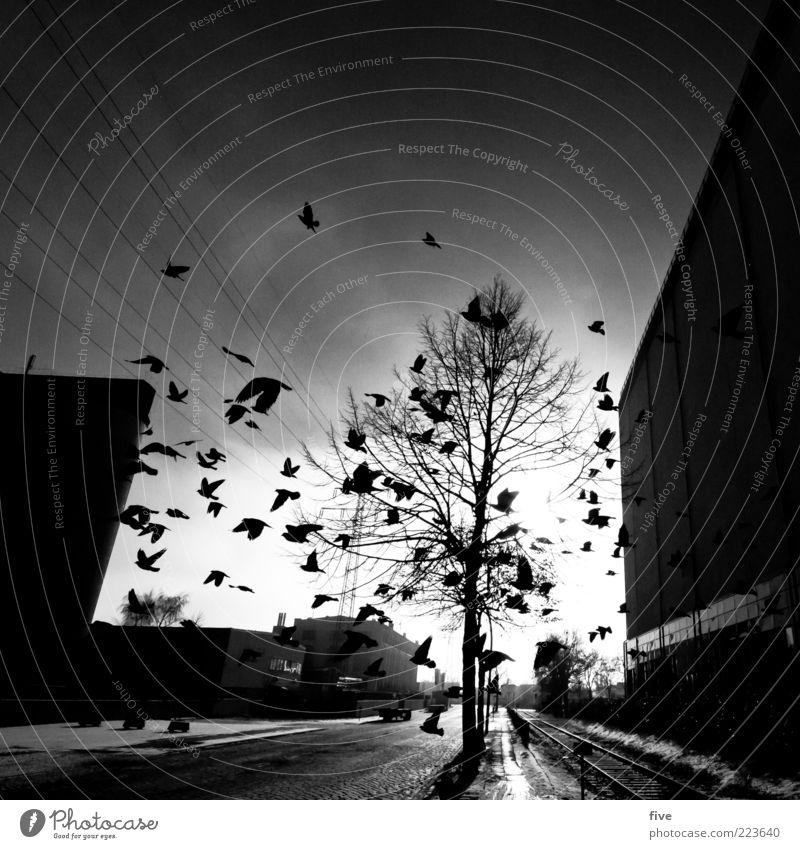 [200] Hamburg Rush Hour Himmel Stadt Baum Winter Tier Straße dunkel Wand Wege & Pfade Mauer Stimmung Gebäude Vogel fliegen Verkehr