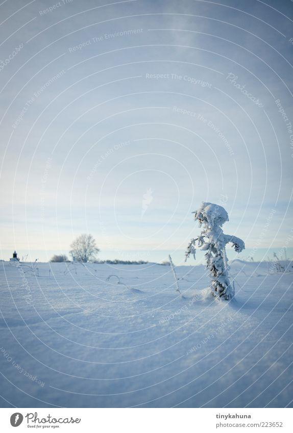 Der Eismann kommt! weiß blau Pflanze Winter ruhig Ferne kalt Schnee Wiese Gras Frost stehen Vergänglichkeit frieren