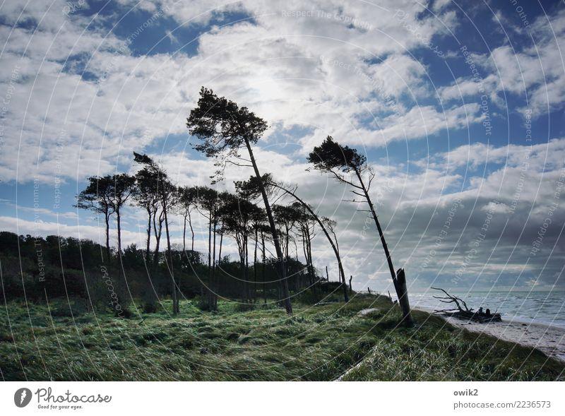 Testreihe Umwelt Natur Landschaft Luft Wasser Himmel Wolken Horizont Schönes Wetter Wind Sturm Baum Gras Sträucher Windflüchter Ostsee Weststrand Bewegung