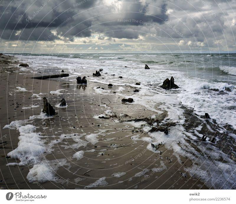 Drift Umwelt Natur Landschaft Urelemente Wasser Wolken Horizont Schönes Wetter Baumstumpf Küste Ostsee Weststrand leuchten maritim nass wild chaotisch