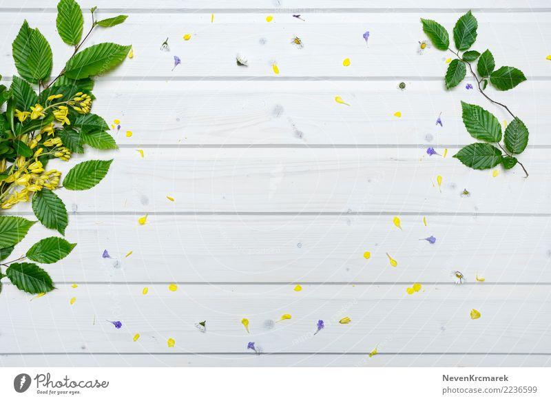 Natur Pflanze Sommer schön grün weiß Blume Blatt gelb Hintergrundbild natürlich Holz elegant ästhetisch frisch authentisch