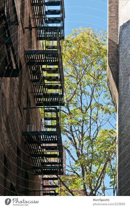 Zwischen Raum Baum Haus Mauer Wand Treppe Feuerleiter Backsteinwand Fluchtweg Farbfoto Außenaufnahme Menschenleer Textfreiraum links Hintergrund neutral Licht