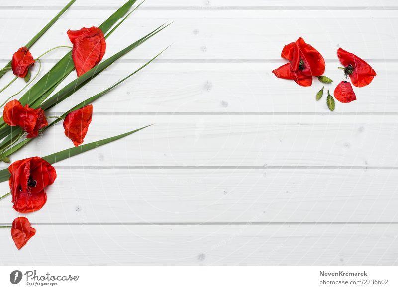 Leere Tischplattenszene mit Mohnblumen Schreibtisch Natur Sommer Pflanze Blume Blüte Mohnblüte Holz ästhetisch authentisch frisch schön natürlich Sauberkeit