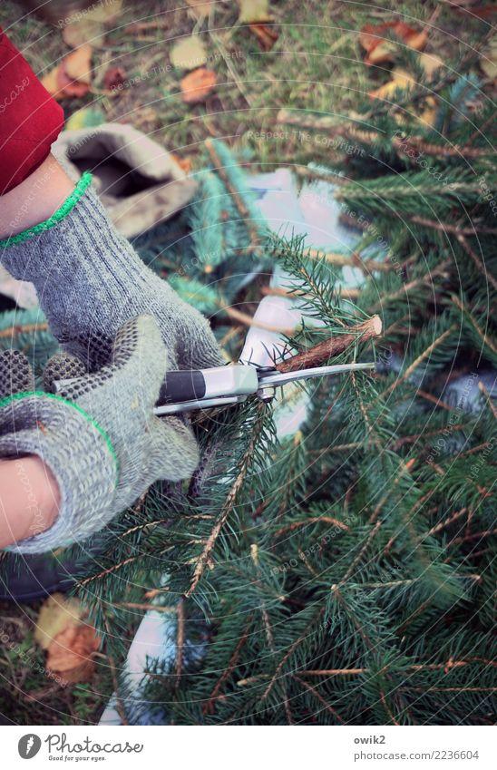 Grab abdecken Gartenarbeit Friedhof Grabschmuck Frau Erwachsene Hand Tannenzweig Tannengrün Tannennadel Handschuhe Gartenschere Arbeit & Erwerbstätigkeit kalt