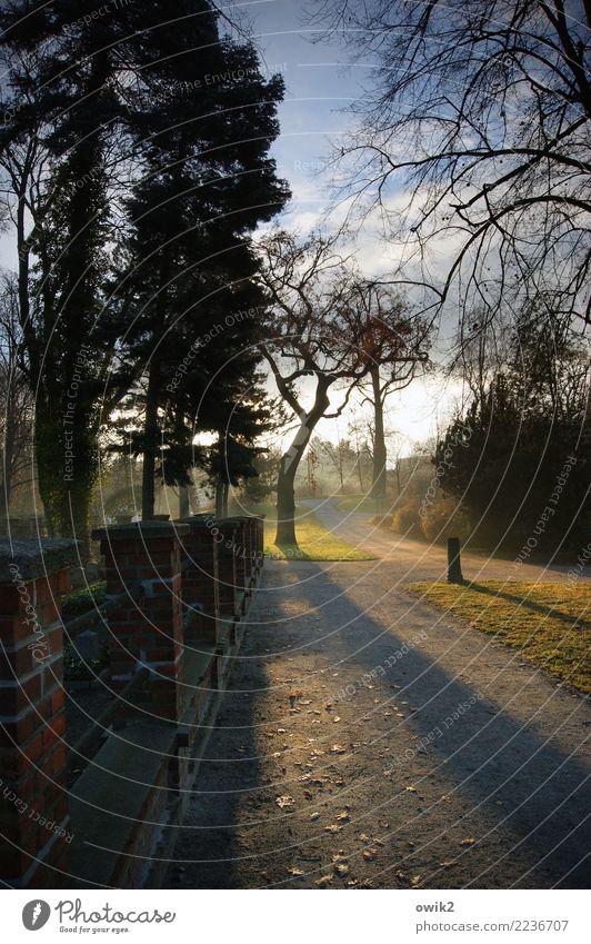 Am russischen Friedhof Umwelt Himmel Wolken Frühling Schönes Wetter Pflanze Baum Gras Sträucher Park Bautzen Lausitz Deutschland Mauer Wand Wege & Pfade