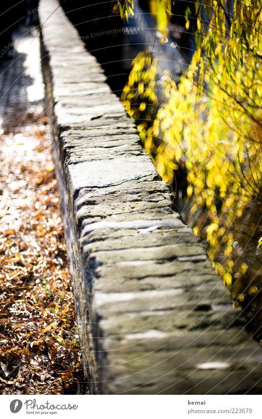Endlose Mauer (LT Ulm 14.11.10) Natur alt Baum Pflanze Sonne Blatt Herbst Wand Umwelt Garten Stein Park hell Sträucher leuchten