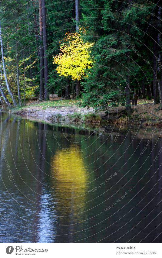 gelbgoldschatzimsee Umwelt Natur Landschaft Pflanze Herbst Baum Blatt Wald Romantik schön Verfall Vergänglichkeit Herbstlaub Herbstfärbung Herbstwald