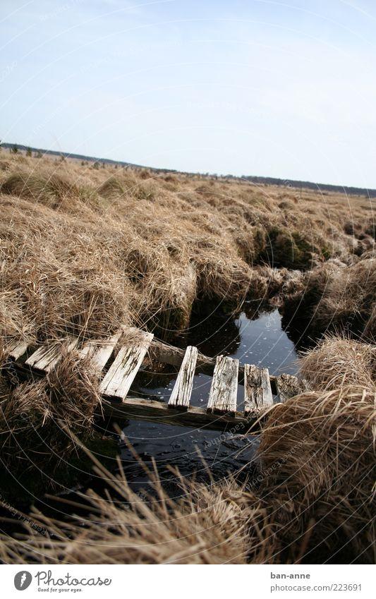 stroh im kopf Landschaft Erde Wasser Horizont Dürre Gras Moor Sumpf Bach Brücke alt trocken ruhig Ende Stimmung Holz Stroh schwarz kaputt verfallen Loch Balken