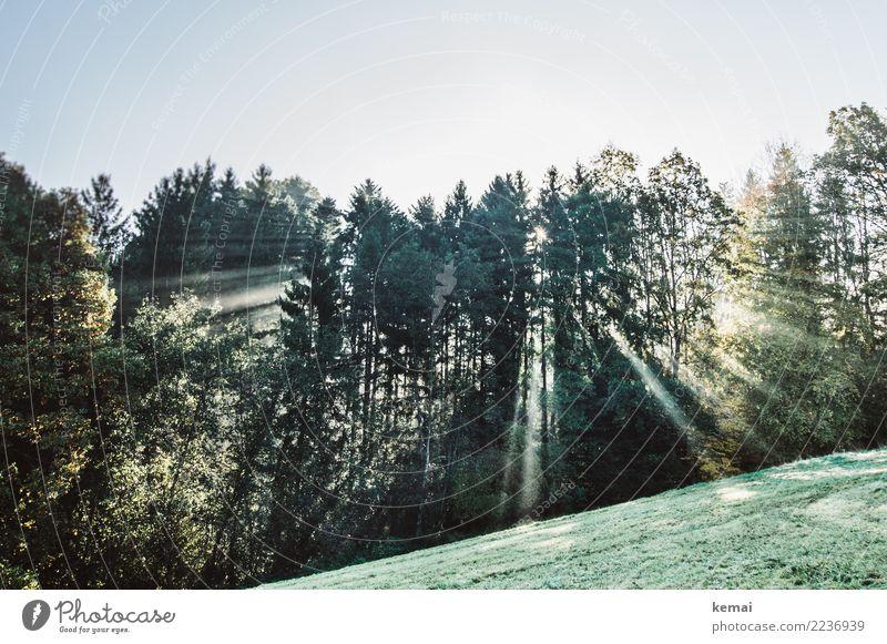 Strahlend harmonisch Wohlgefühl Zufriedenheit Sinnesorgane Erholung ruhig Freizeit & Hobby Ausflug Abenteuer Freiheit Natur Pflanze Wolkenloser Himmel