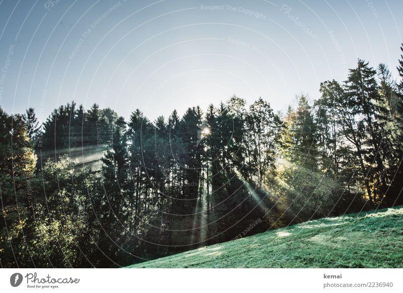 Lichtstrahlen Wohlgefühl Zufriedenheit Sinnesorgane Erholung ruhig Freizeit & Hobby Freiheit Natur Landschaft Pflanze Wolkenloser Himmel Herbst Schönes Wetter