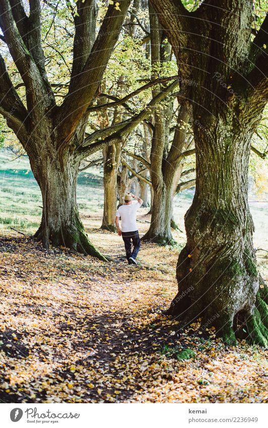 Der Mann mit Hut Mensch Natur Sommer Landschaft Baum Erholung Wald Lifestyle Erwachsene Leben Stil Freiheit Ausflug gehen Zufriedenheit