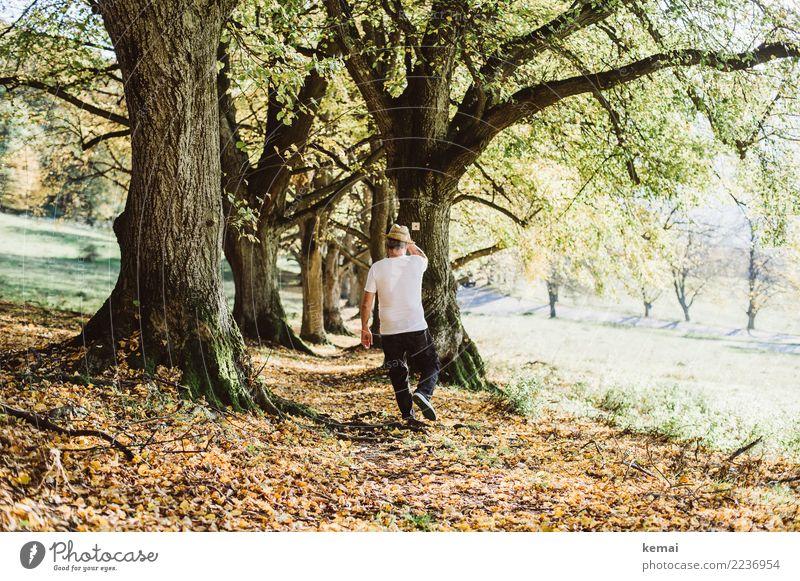 Ein Mann mit Hut geht Mensch Natur Baum Erholung ruhig Lifestyle Erwachsene Leben Wärme Herbst Senior Wege & Pfade Freiheit Ausflug gehen