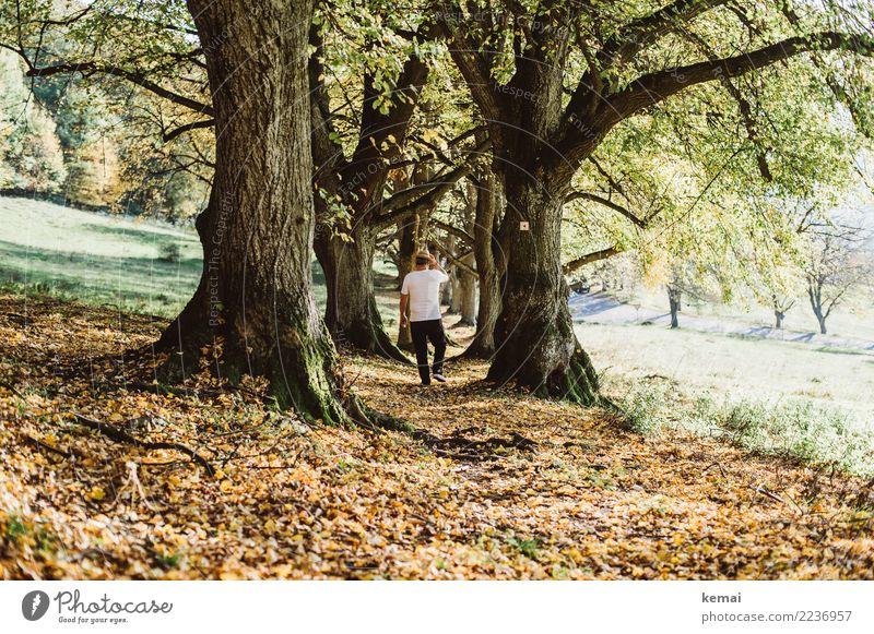 Gehen Lifestyle Leben harmonisch Wohlgefühl Zufriedenheit Sinnesorgane Erholung ruhig Freizeit & Hobby Ausflug Freiheit wandern Mensch maskulin Mann Erwachsene