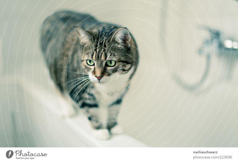 Katzenbad grün Tier grau braun Wohnung ästhetisch stehen Bad Häusliches Leben Tiergesicht Sauberkeit Fell Badewanne Haustier Gleichgewicht