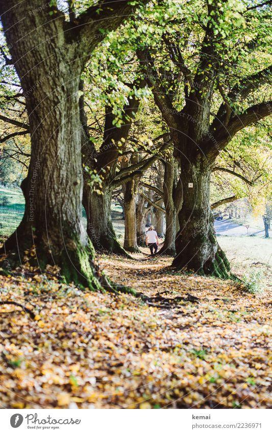 Der Weg Leben harmonisch Wohlgefühl Zufriedenheit Sinnesorgane Erholung Freizeit & Hobby Ausflug Abenteuer Freiheit wandern Mensch maskulin Mann Erwachsene 1