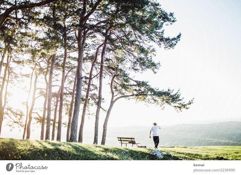 Der Mann mit Hut in der Abendsonne Mensch Natur Sommer schön Landschaft Baum Erholung ruhig Ferne Erwachsene Wärme Leben Lifestyle Umwelt Stil