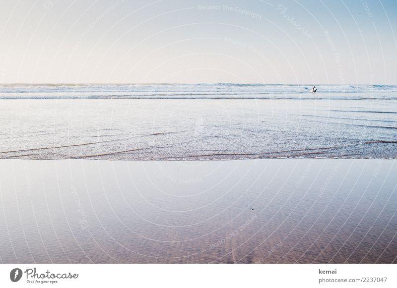 Surfen gehen Mensch Natur Ferien & Urlaub & Reisen Wasser Meer Erholung ruhig Ferne Strand Lifestyle Umwelt Küste Tourismus Freiheit Ausflug Freizeit & Hobby
