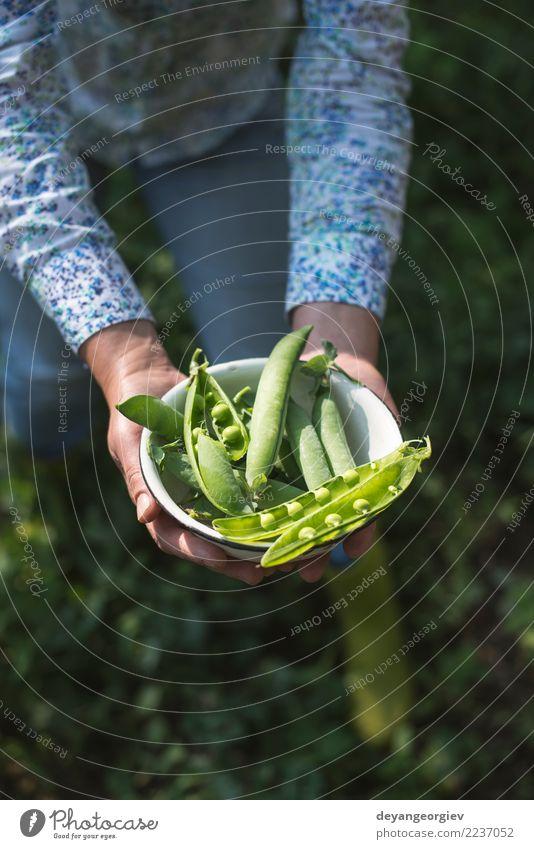 Erbsenpflanzen ernten Frau Natur Pflanze Sommer grün Sonne Hand Blatt Erwachsene Garten Wachstum frisch Gemüse Bauernhof Ernte reif