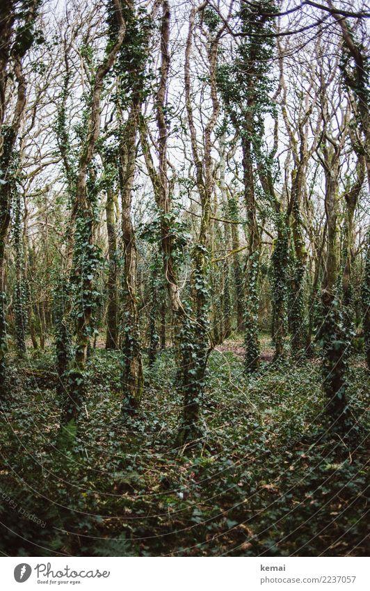 Ivy Natur Pflanze grün Landschaft Baum Einsamkeit ruhig Wald dunkel Umwelt Traurigkeit außergewöhnlich Freiheit Ausflug Freizeit & Hobby wandern