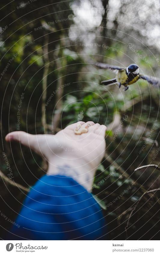 Vorsichtige Annäherung Mensch Natur Hand Tier Wald Umwelt natürlich Spielen außergewöhnlich Vogel Zusammensein fliegen Freundschaft Freizeit & Hobby Park